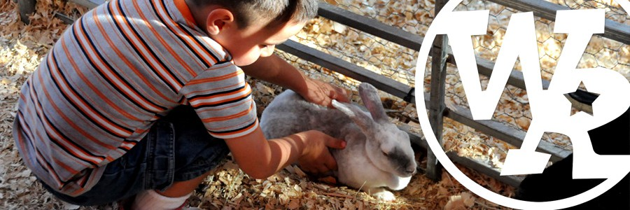 Awesome petting zoos for your party!